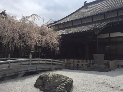 玉蔵院の桜.JPGのサムネール画像